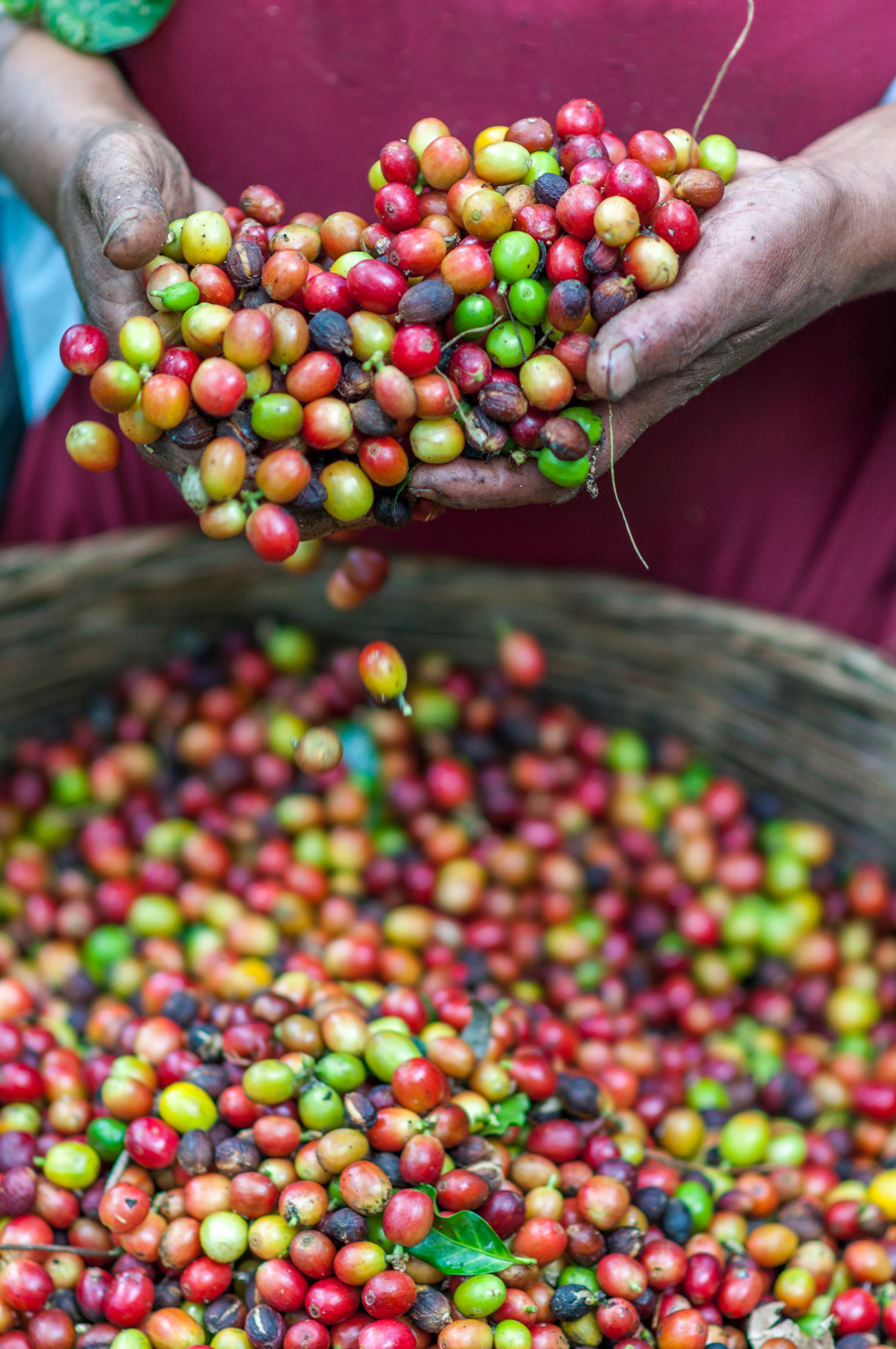 Brazil and Colombia Meet to Address Coffee Price Crisis – coffee t&i